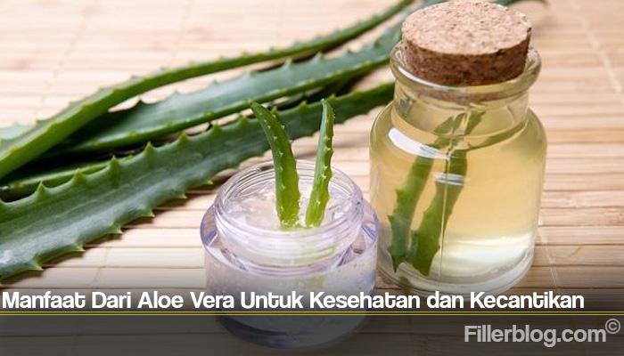 Manfaat Dari Aloe Vera Untuk Kesehatan dan Kecantikan